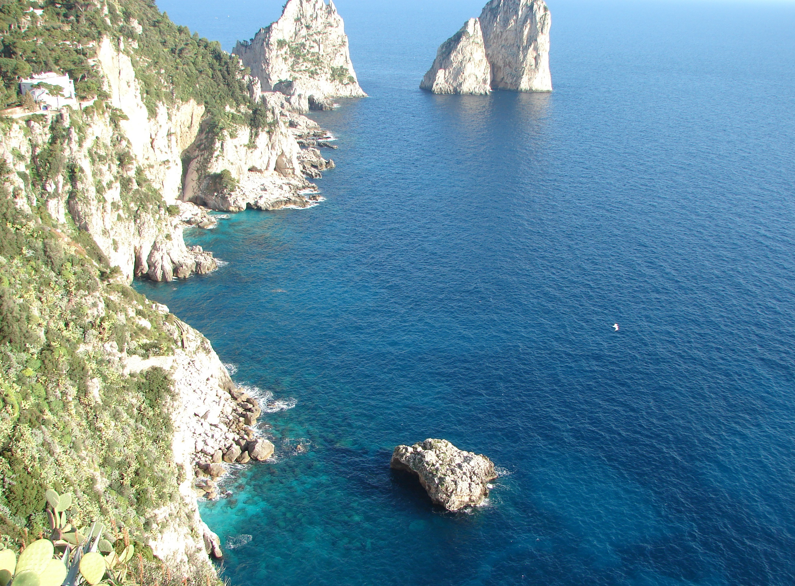 CAPRI full day